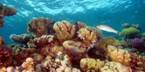 Mercan resifleri tarihe karışıyor