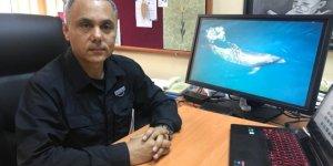 Karadeniz'deki yunusların nesli tehlikede