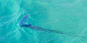 13 bin kişiyi denizanaları soktu