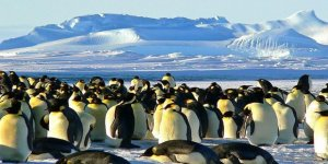 Çok sayıda penguen mahsur kaldı