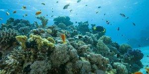 Mercanları taşıyıp hayat verdiler
