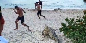 Plajı timsah bastı çığlıklar birbirine karıştı!