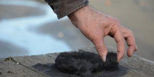 Doğal sağlık cevheri: 'Manyetik siyah kum'