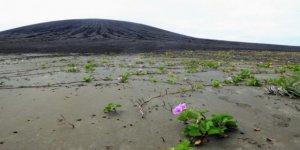 Dünyanın en yeni adasında hayat belirtileri başladı