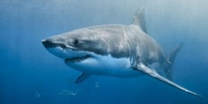 Köpekbalıklarının ölümü ekosistemi değiştiriyor