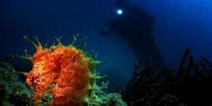 İnsansız su altı aracıyla denizin dibi haritalanacak