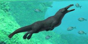 Dört bacaklı balina fosili bulundu