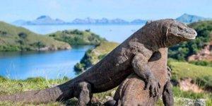 Komodo ejderlerini sadece zenginler görebilecek