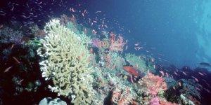 BAE mercan resifyapıyor