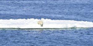 Buz parçası üzerinde 700 kilometre uzağa gitti