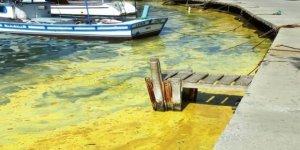 Ayvalık'ta denizde sarı tabaka oluştu