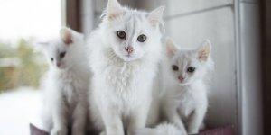 Kedi tırmalama tahtası nedir, neden önemlidir?