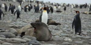 Antarktika'ya can veren hayvanlar