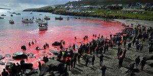 Balina katliamında deniz yine kan gölüne döndü