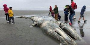 'Ölü balinalar nasıl çürüyecek' tartışması