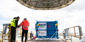 Beluga balinaları İzlanda'ya sağ salim ulaştı