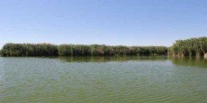 Eber Gölü'nün dip çamuru temizlenecek