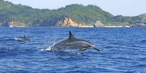 Yunusların cenneti Ogasawara Adaları