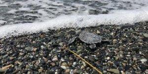 DTO'nun koruduğu kaplumbağalar denizle buluştu