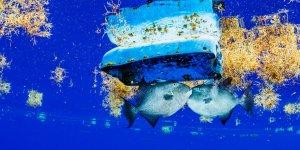 Plastik kirliliği Sargasso Denizi'ni tehdit ediyor