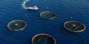 Su ürünleri ihracatı  için yeni üretim alanları