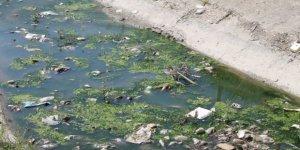 Karadeniz'deki kirlilik mercek altında