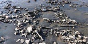 Sular çekildi kemikler çıktı