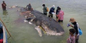 Sahile 14 metrelik balina vurdu