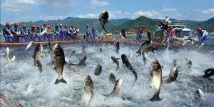 Küresel ısınma sofradaki balığı da vurdu!