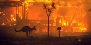 Avustralya yangını hala devam ediyor mu?