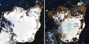 İklim değişikliği beyaz kıtayı yeşillendiriyor