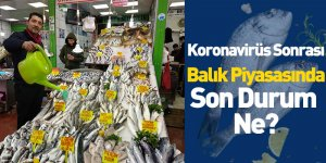 Koronavirüs Sonrası Balık Piyasasında Son Durum  Ne?