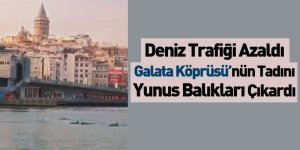 Galata Köprüsü'nün Tadını Yunus Balıkları Çıkardı