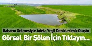 Baharın Gelmesiyle Adeta Yeşil Denizlerimiz Oluştu