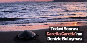 Tedavi Sonrası Caretta Caretta'nın Denizle Buluşması