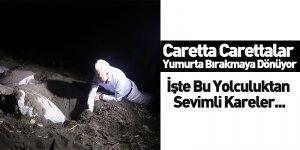 Caretta Carettalar Yumurta Bırakmaya Dönüyor