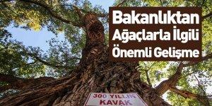 'Anıt Ağaç'lara Yenileri Eklendi