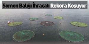 Somon Balığı İhracatı Rekora Koşuyor