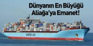 Maersk'in Sattığı Sine Maersk Gemisi Aliağa'da Sökülecek