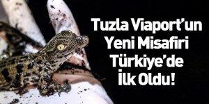 Türkiye'nin İlk Nil Timsahları Tuzla Viaport Marina'da Dünyaya Geldi