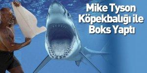 Mike Tyson Köpekbalığı ile Boks Yaptı