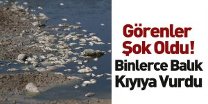 Bursa Mudanya'da Binlerce Kıyıya Vurdu