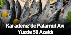 Karadeniz'de Palamut Avı Yüzde 50 Azaldı