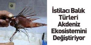 İstilacı Balık Türleri Akdeniz Ekosistemini Değiştiriyor