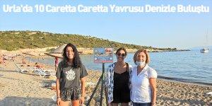 Urla'da 10 Caretta Caretta Yavrusu Denizle Buluştu