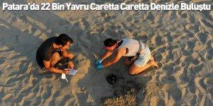 Patara'da 22 Bin Yavru Caretta Caretta Denizle Buluştu