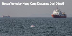 Beyaz Yunuslar Hong Kong Kıyılarına Geri Döndü