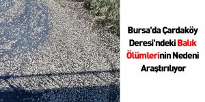 Bursa'da Çardaköy Deresi'ndeki Balık Ölümlerinin Nedeni Araştırılıyor