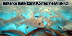 Binlerce Balık İzmit Körfezi'ne Bırakıldı