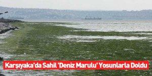 Karşıyaka'da Sahil 'Deniz Marulu' Yosunlarla Doldu